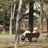 公園の高齢者